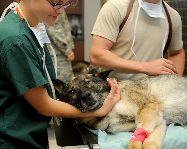 pes u veterináře